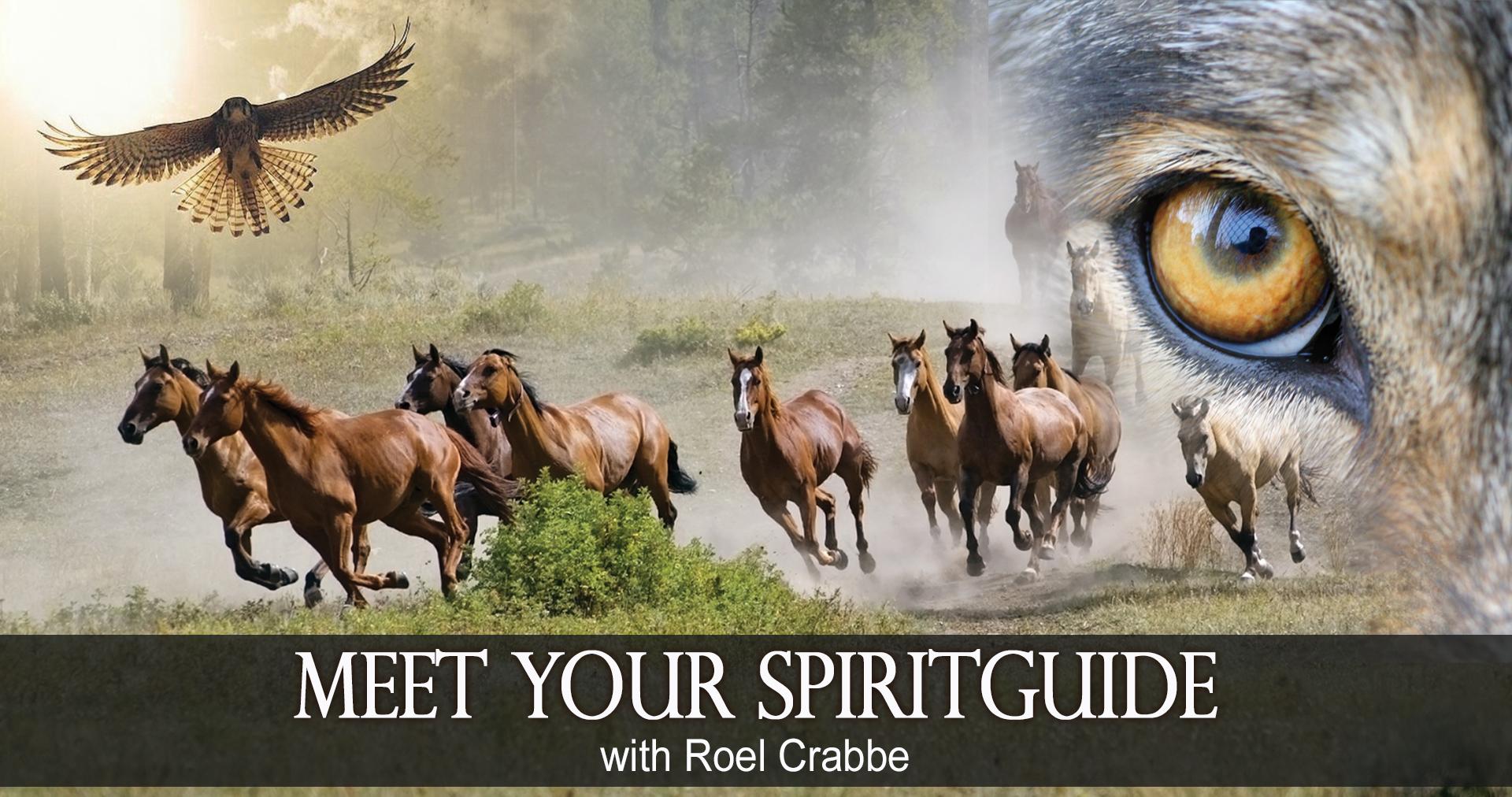 Banner-Meet-your-Spiritguide2